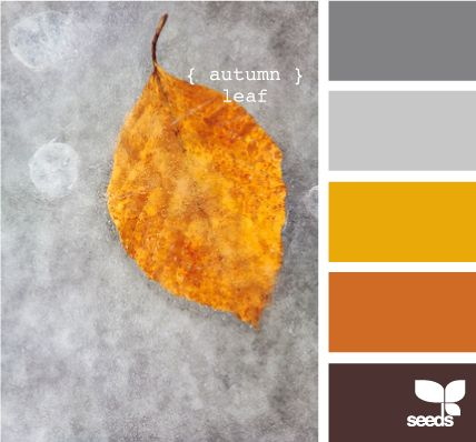 color palette to help me coordinate with orange chair
