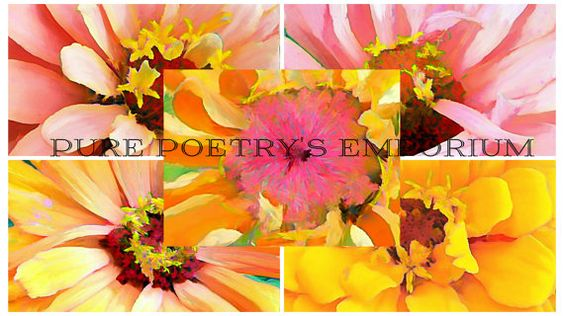 Set of 5 Zinnia Flowers Close Ups Photo Art by PurePoetrysEmporium