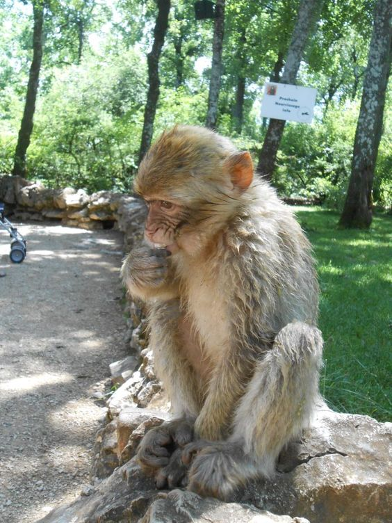 Monkey Forest Near Rocamadour, France