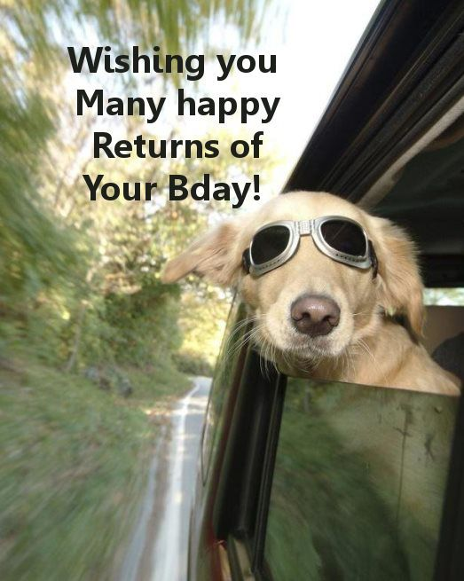 free dog sayings | Birthday Wishes Topics Greeting Words Party Ideas Home Kootation