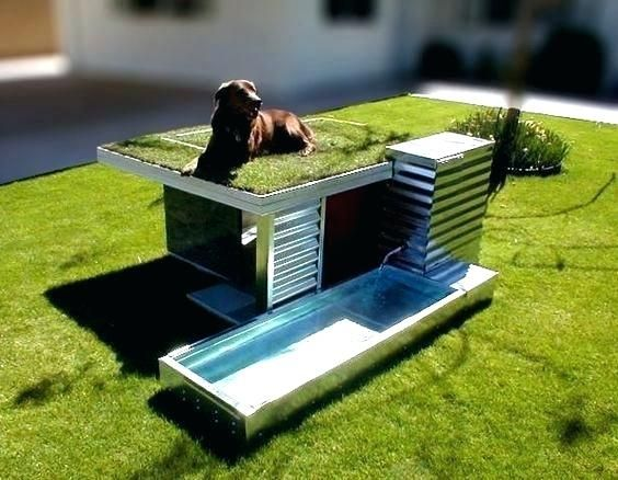 Amazing Dog Houses Modern House With Rooftop Garden And Pool