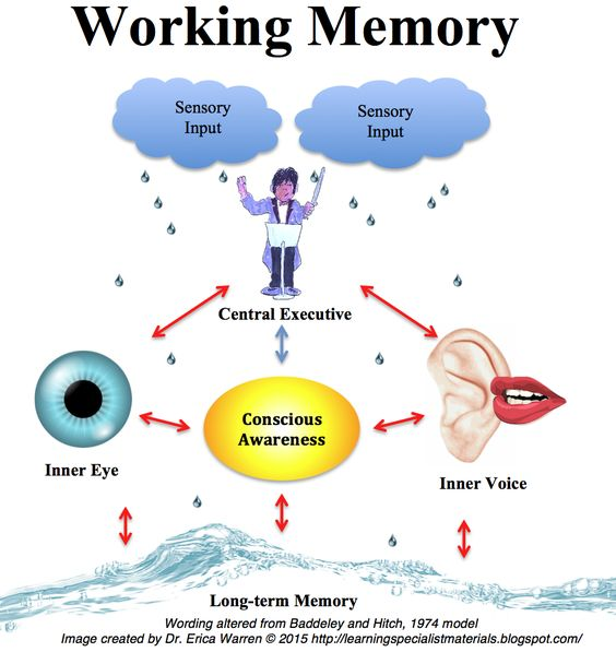 characteristics of memory and the way it works The following overview offers a brief look at what memory is, how it works and how it is one way of thinking about memory organization is known as the semantic.