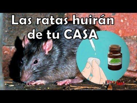 Como Acabar Con Las Ratas En El Jardin Los Ratones Desapareceran En Manada Si Le Preparas Eso Y Lo Pones
