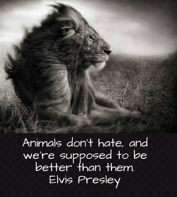 Image result for elvis presley love animals