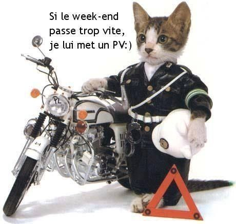 Le chat policier