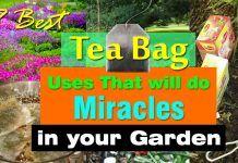 7 Best Tea Bag Uses In Garden