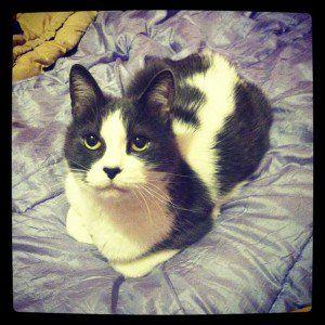 adorpheus's cat GOOD GUY TIGH