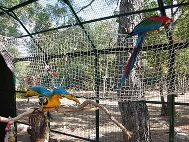 Video 209 offrez une voli re ext rieure vos oiseaux for Oiseau de voliere exterieur