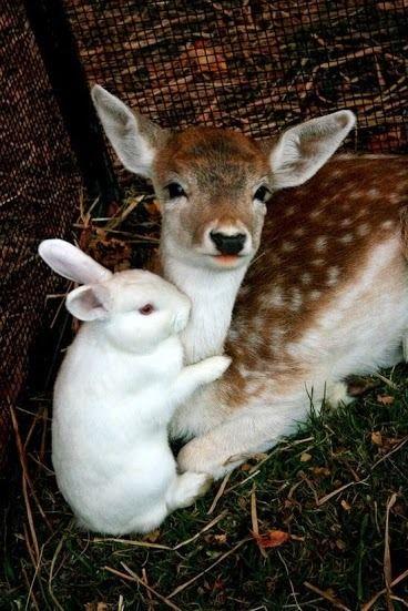 Bambi & Thumper Revisited
