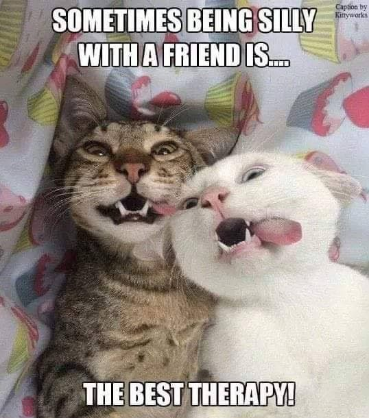 Pin By French On All Memes Cute Animal Memes Cute Funny Animals Funny Cats