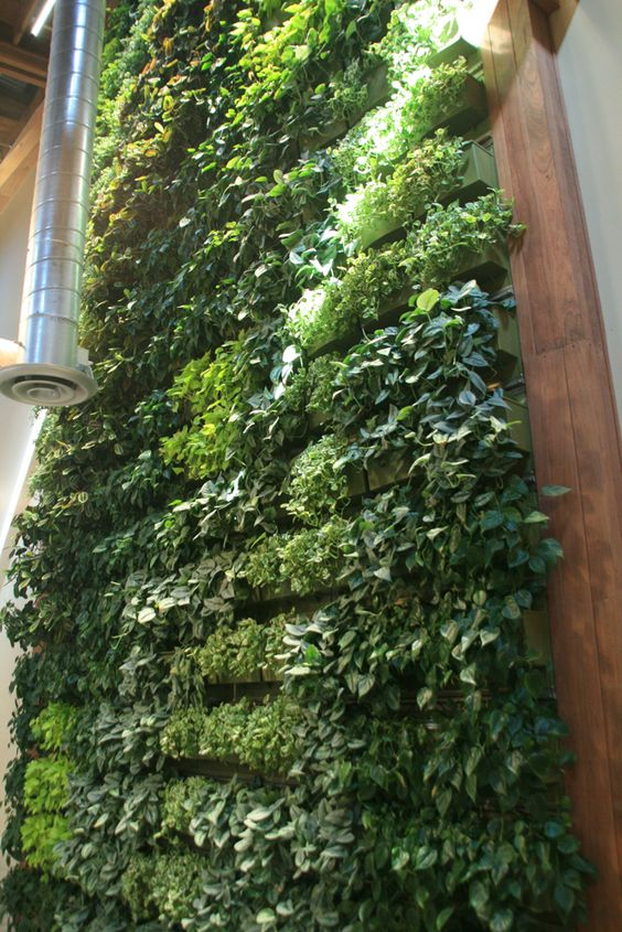 Westland Real Estate Indoor Living Wall - LiveWall