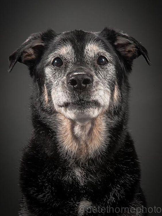 Ces magnifiques photos de chiens très âgés mais toujours fidèles font vraiment chaud au cœur !