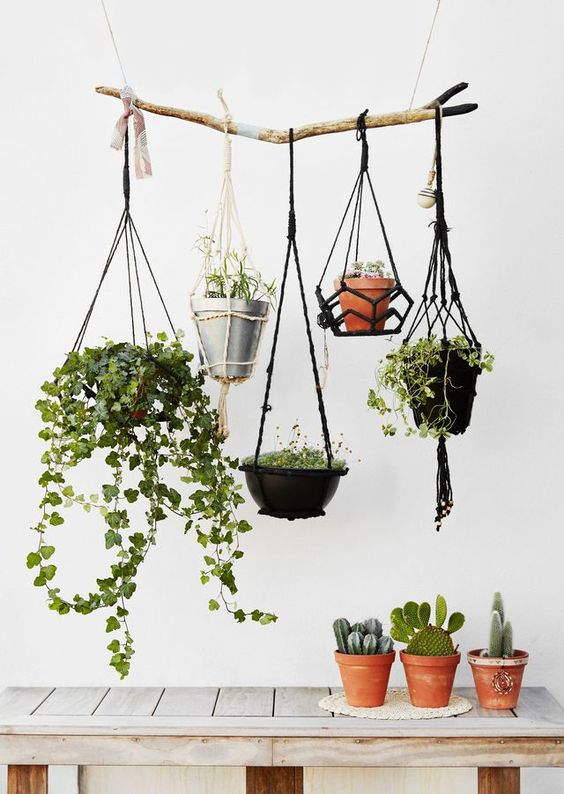 Potted Plants Styled On Table and Hanging from Branch Macrame Hanging Plant Cacti