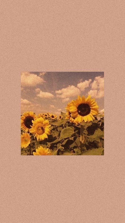 Aesthetic Wallpaper Iphone Pastel Cute Tumblr Wallpaper Iphone Wallpaper Vintage Tumblr Wallpaper