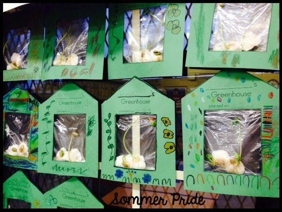 Growing beans in little Greenhouses! {FREEBIE}