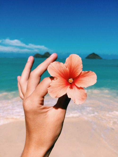 Tropical hibiscus & beach - two of my favs #summer #beautyinthebag