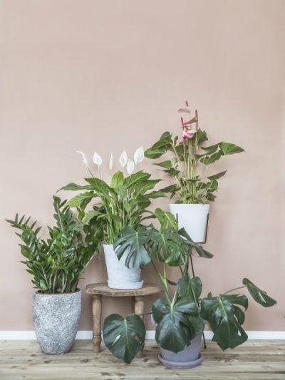 Muttertags-Mutterpflanze Pflanzenfreude.de