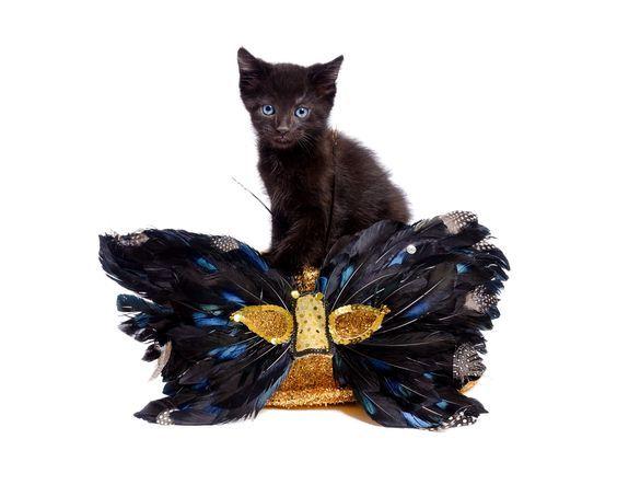 Pin On Mardi Gras Cats