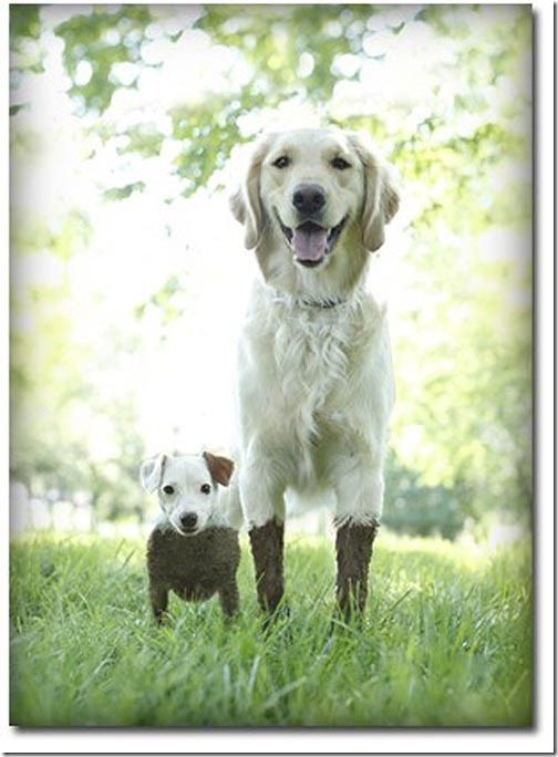 those are some happy doggies!