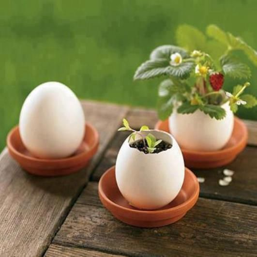 Start plants and/or flowers in egg shells. The protein inside the egg feeds the flower as it grows. Then plant it... egg and all... in the ground or larger pot. This would make a great idea for Earth Day lesson or for a gift craft during the Easter season.: