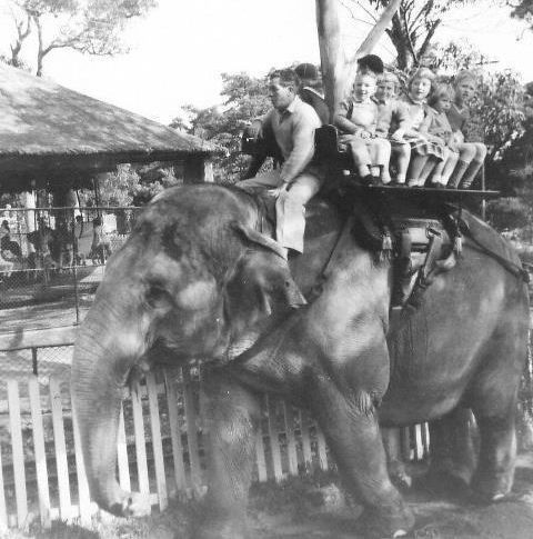 """Taronga Park Zoo"" in Sydney, Australia in 1963: Elphant handler, (Harry Willey) taking children for a ride. v@e"