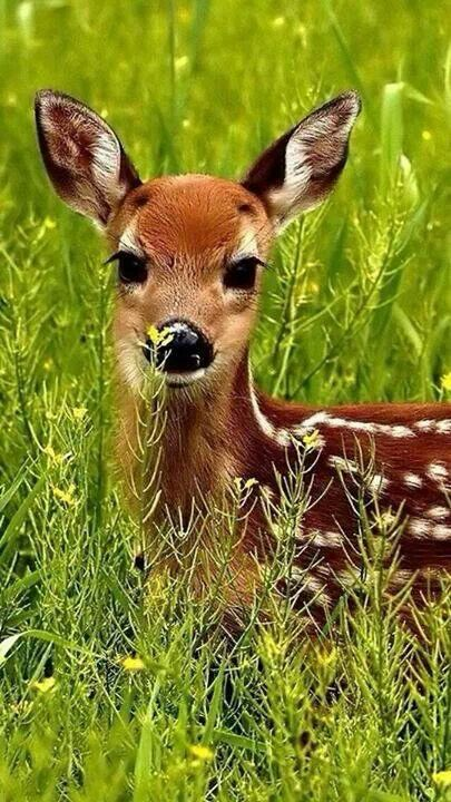 Deer Iphone Wallpapers And The Cutest On Pinterest