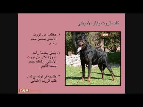 بيتس جوت ويب لشراء وبيع الحيوانات تقدم لكم مواصفات كلاب الروت وايلر وطري Art Pandora Screenshot