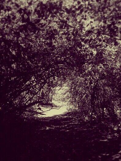 Light through the leafy tunnel