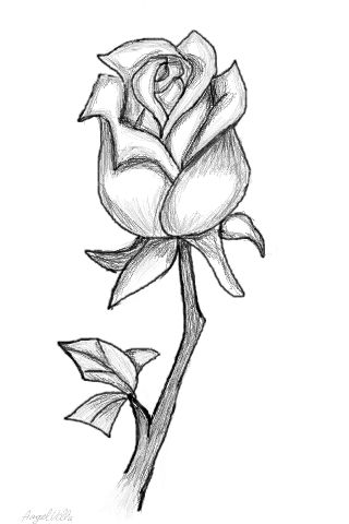 A drawn rose | Art Ideas | Pinterest | Roses