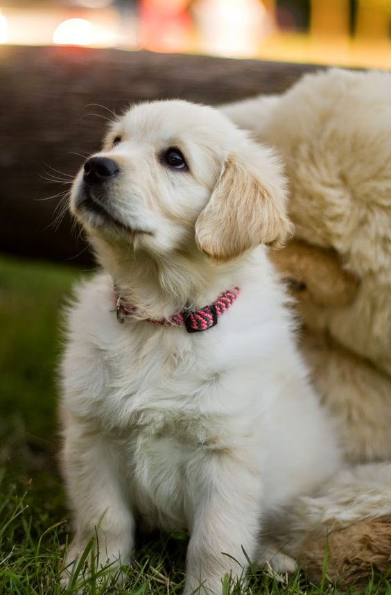Top 5 Family Friendly Dog Breeds | Puppies!! | Pinterest ...