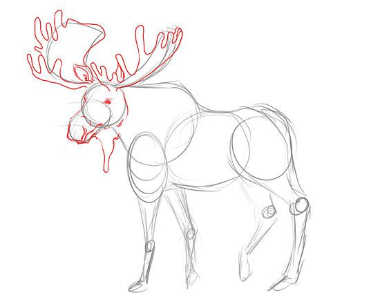 How to draw a moose google search moose pinterest for How to draw a moos