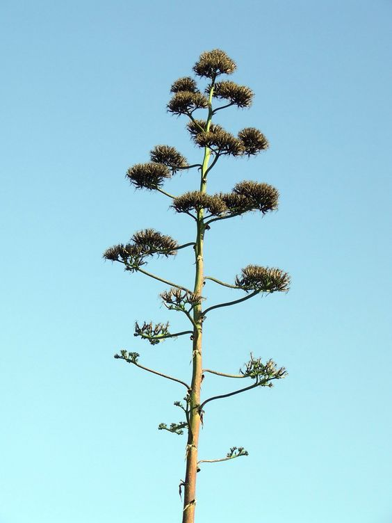Exotic-tree1794.jpg (1200×1600)
