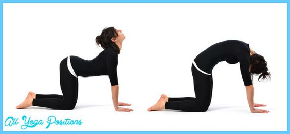 Cow Pose Yoga - http://allyogapositions.com/cow-pose-yoga.html