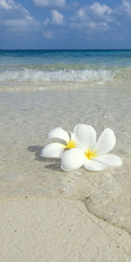 Pic of the Day...Floral 🌸 ------------ #beach #beaches #tropics #paradise #travel #water #ocean