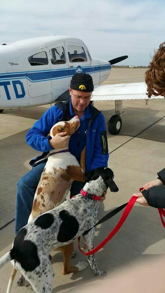 Pilots N Paws --- helping pups get to their new homes