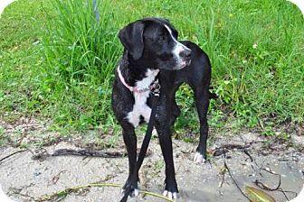 Sanford, FL - Bernese Mountain Dog Mix. Meet Terra (F) the swiss mom, a dog for adoption. http://www.adoptapet.com/pet/13058497-sanford-florida-bernese-mountain-dog-mix