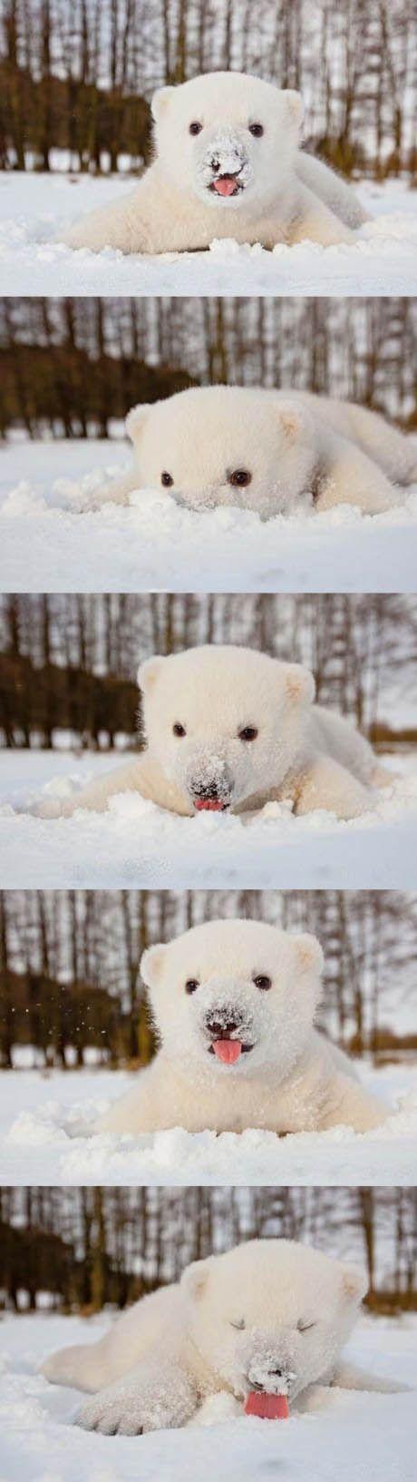 Polar bear = adorbs.