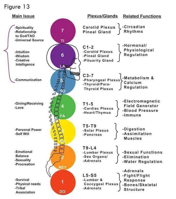 Chakra's ... the corresponding glands and their function.