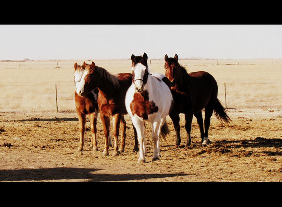 My horse Poncho is in the middle.