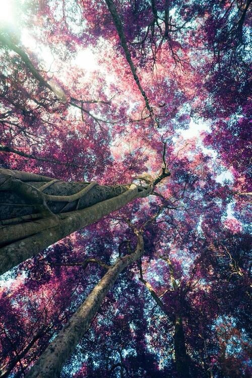 I'm in love. Pink. Trees.