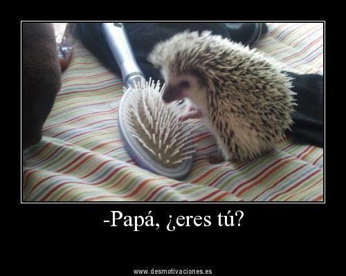 Esta foto es muy chistoso el animalito piensa que es su papa... El peiné se ve mucho como el cuerpo espina