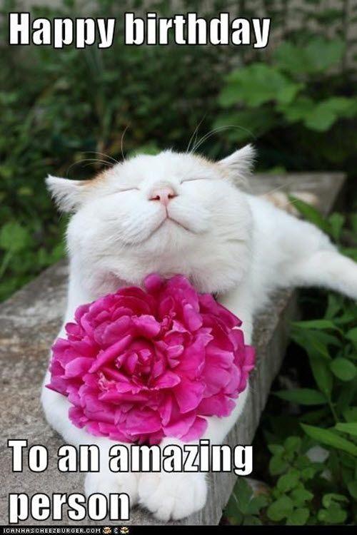 35 Cat Birthday Memes That Are Way Too Adorable Sayingimages Com Birthday Wishes Funny Cat Birthday Memes Birthday Meme Dog