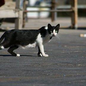 Il gatto è un animale stanziale, non ama scappare. Tuttavia ama esplorare nuovi luoghi e può capitare che si allontani troppo da casa senza riuscire a tornare indietro. Qualche regola da seguire per riportarlo a casa.
