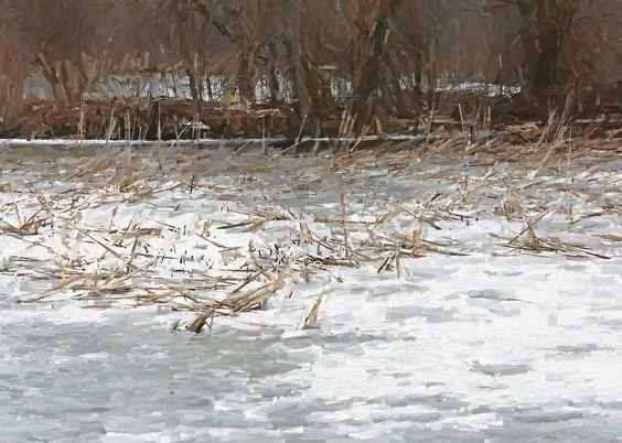 https://flic.kr/p/RMXPBV | Reeds in Ice