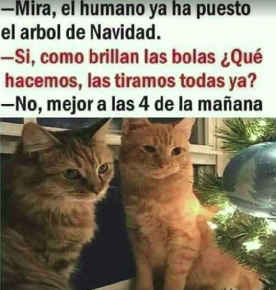 Memes De Gatos Vs La Navidad Memes En Espanol La Mejor Recopilacion De Memes Lo Mas Viral De Meme Gato Gatitos Divertidos Humor Divertido Sobre Animales