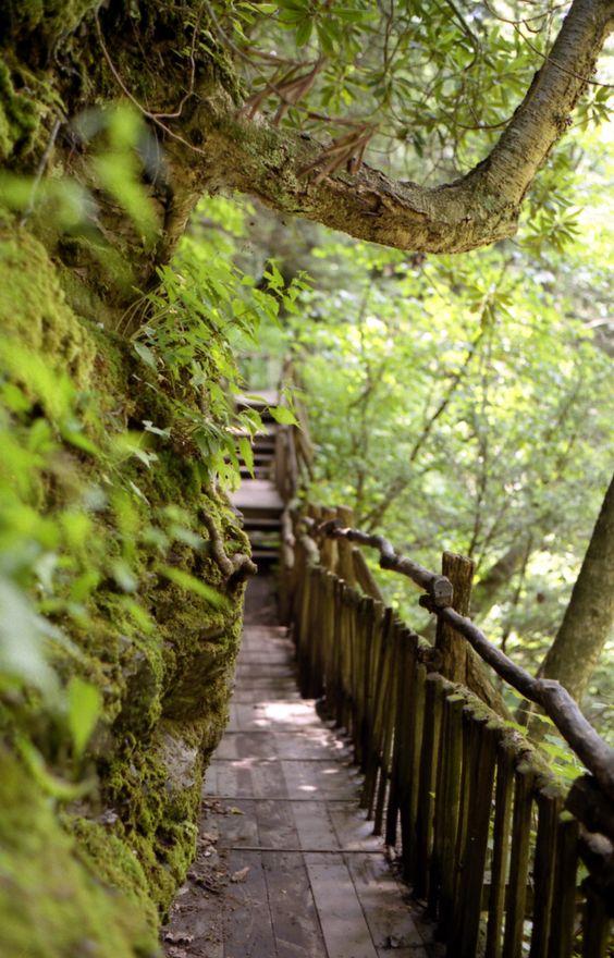 20 Incredible Hikes Under 5 Miles Everyone In Pennsylvania Should Take1. Bushkill Falls, Stroudsburg