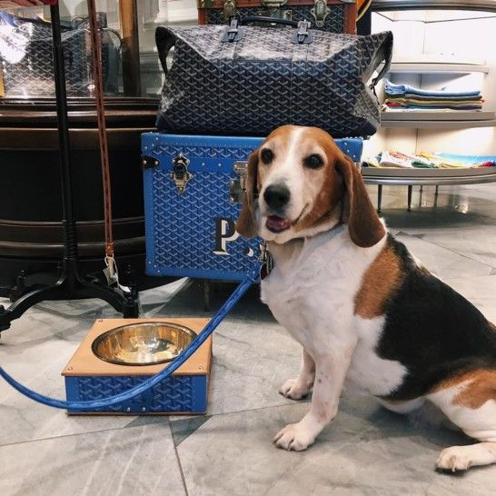 Goyard S Chic Du Chien Luxury Pet Accessories Pet Accessories