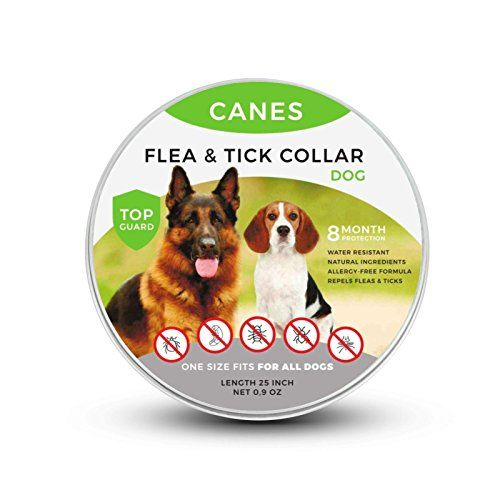 Canes Trade Flea And Tick Prevention For Dogs Natural Flea And Tick Collar For Dogs One Size Fits All 25 Inch 8 Month Protection Charity With Images Flea And Tick Fleas