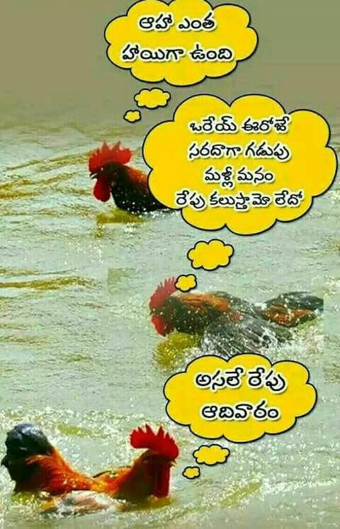 Funny Saved By Sriram Telugu Jokes Sunday Quotes Funny Jokes Quotes