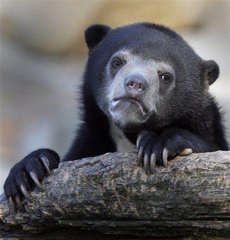 sad bear!